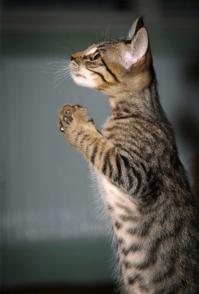 姿勢のいい猫