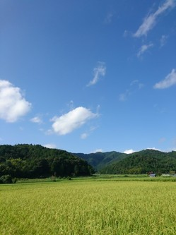 青空と田んぼの緑