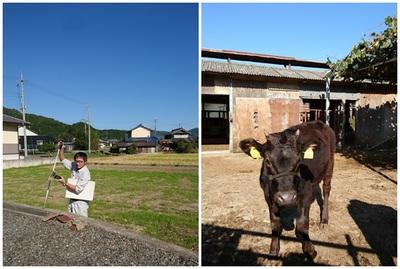 測量と牛さん